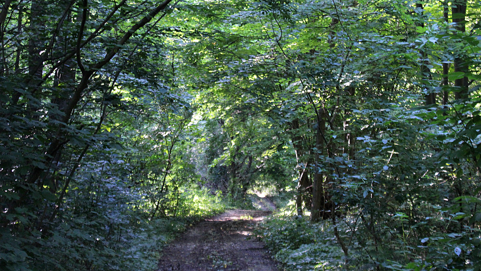 A dense forest with a small trail in the middle.