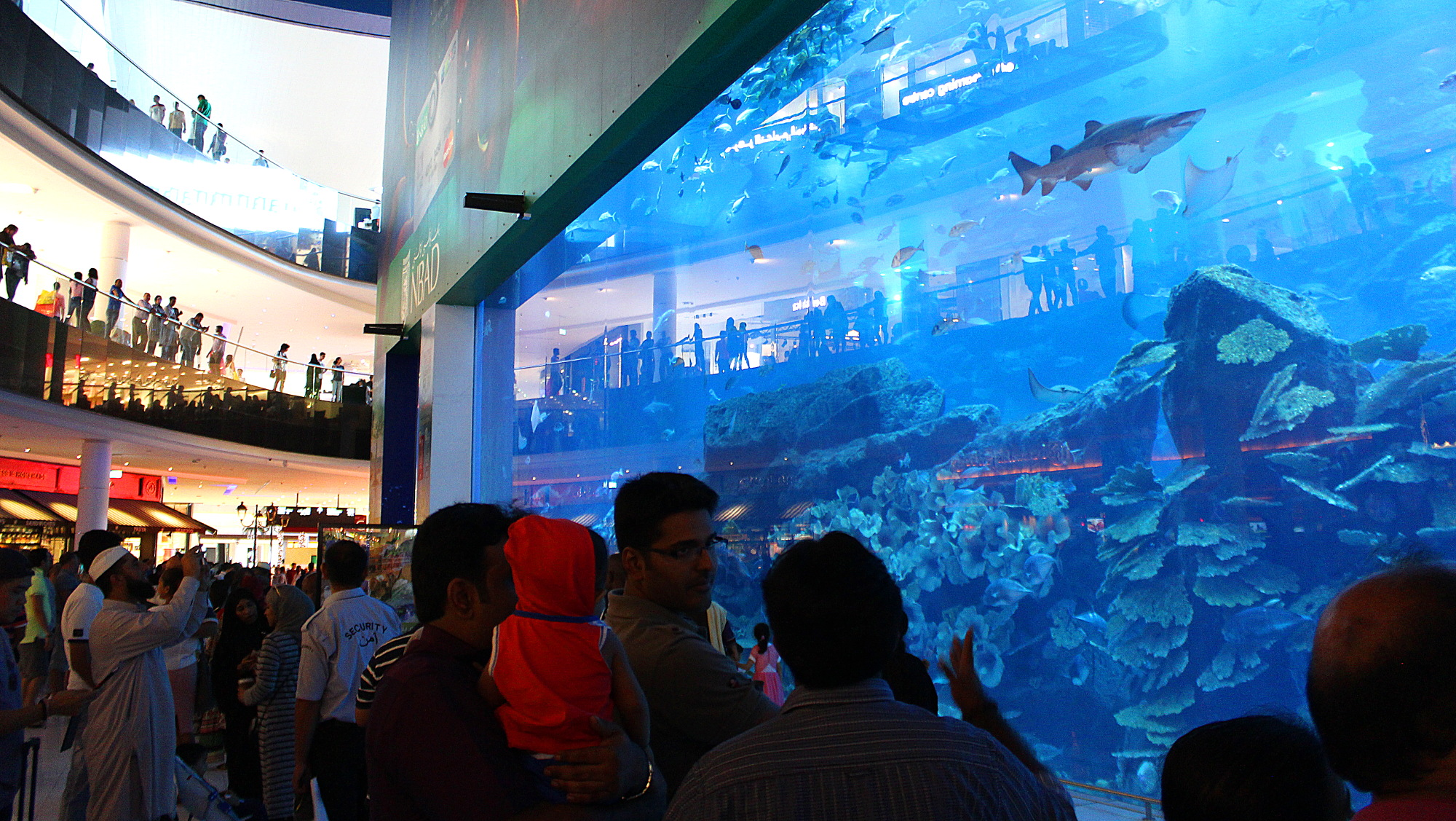 Spectator aquarium window for the Dubai Aquarium and Underwater Zoo in Dubai Mall.
