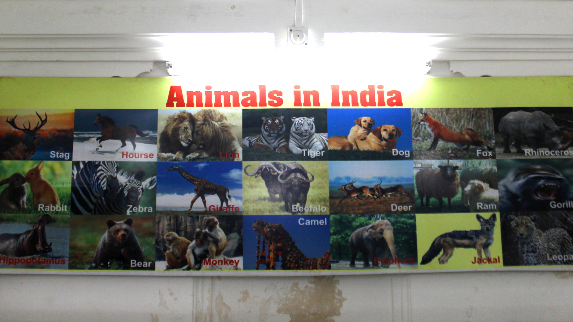 "A poster of the ""Animals of India"" that mistakenly includes zebras and giraffes among other animals. Located in the science museum of Saheliyon-ki-Bari garden."