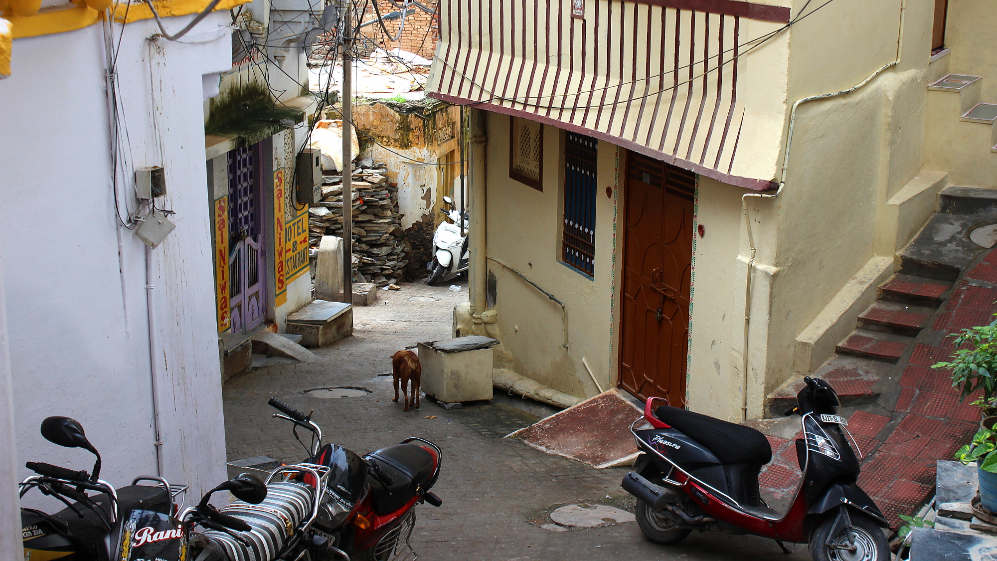 Another narrow side street in Udaipur with parked motorcycles and a stray dog walking downhill.