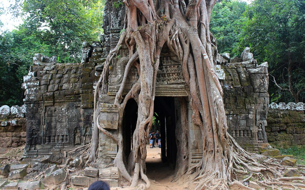 A tree growing over a temple gate in Angkor, Siem Reap, Cambodia.