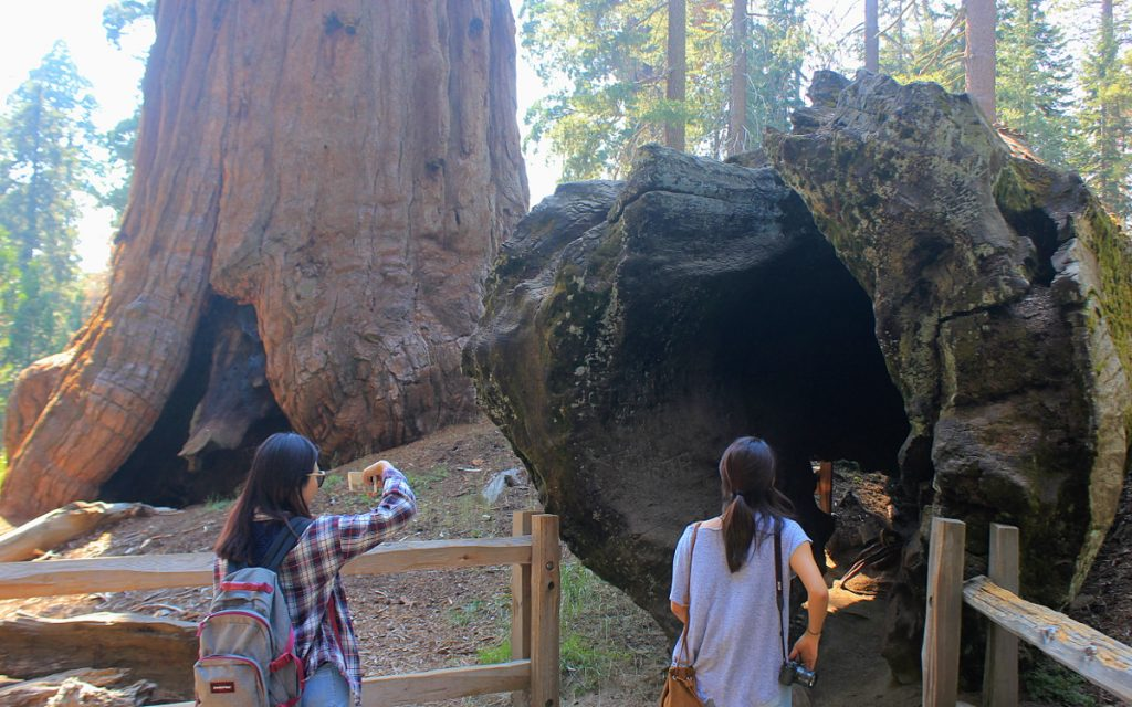 Hollow tree trunk at Sequoia National Park