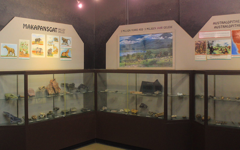 Makapansgat Caves exhibition in Arend Dieperink Museum, Mokopane. Fossils on display.