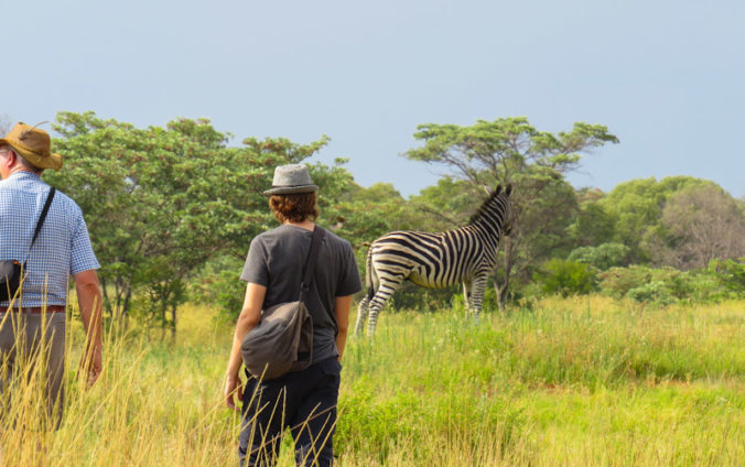 Spotting zebras at Entabeni Safari Conservatory, Limpopo, South Africa.