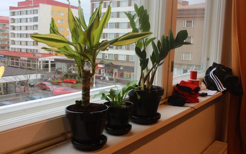 House plants on a windowsill in Jyväskylä, Finland.